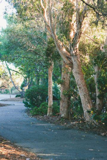 3 Parks to Visit in San Jose, California