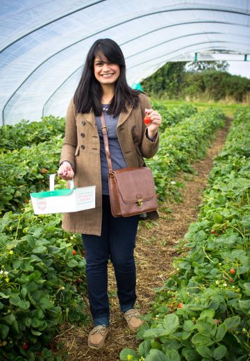 Strawberry & Sunflower Picking at Cairnies Farm Cover Image