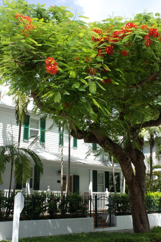 Photos to Inspire You To Visit Key West, Florida