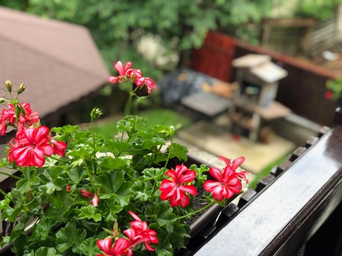 Vedere spre foişor şi grădină, din balconul camerei duble cu vedere la munte