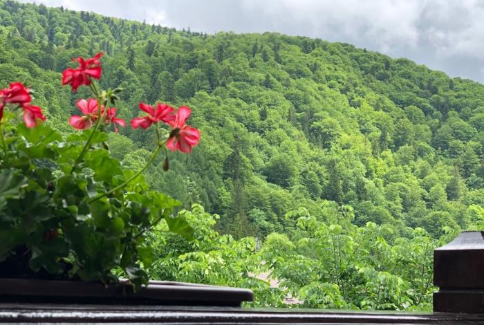 Vedere spre Munţii Baiului, din camera dublă cu vedere la munte