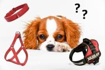 Collier ou harnais : que choisir pour son chien ?
