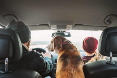 Comment transporter son chien en voiture: astuces pour un voyage sans stress