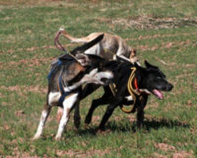 Comment calmer un chien hyperactif
