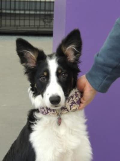 Votre chien déteste être pris au collier ? Comment éviter ces réactions ?