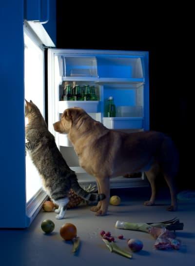 Le top 6 des aliments les plus toxiques, voire mortels, pour votre chien