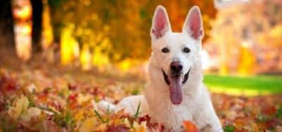 7 dangers  menacent votre chien à l'automne ; les connaissez vous ?