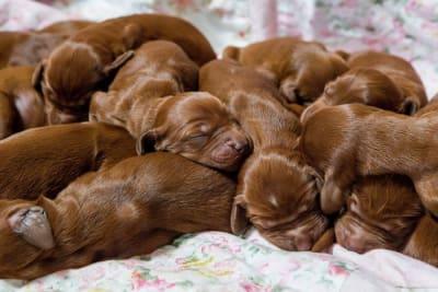 langage corporel canin fatigue et signaux d 39 alarme chien calme. Black Bedroom Furniture Sets. Home Design Ideas