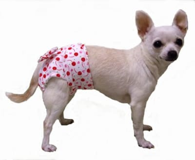 Les chaleurs sont la phase du cycle de reproduction d'une chienne au cours de laquelle elle devient réceptive à l'accouplement avec des mâles. À ce stade, les taux d'œstrogènes augmentent tout d'abord, puis diminuent rapidement, et les ovaires matures sont libérés.