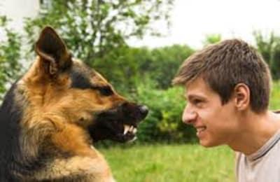 Votre chien grogne : que faire ?