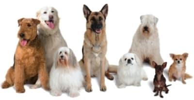 Quel chien est fait pour vous ?