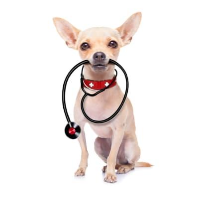 Quelle nourriture pour mon chien cardiaque ?