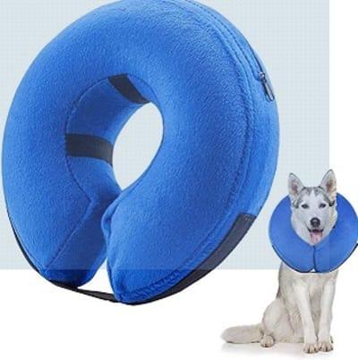 Collerette pour chien : tout ce que vous devez savoir !