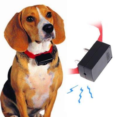 Rien ne justifie les traitements suivants envers votre chien. Inutile d'utiliser un collier électrique, de le frapper. Pas la peine non plus de lui jeter de l'eau à la figure ou de le mettre sur le dos, vous en position de mâle alpha.