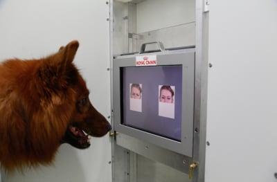 Oui nos petits compagnons sont beaux, oui ils sont gentils mais ils sont aussi extrêmement intelligents! Récemment des chercheurs ont mis en évidence le point suivant: avec un peu d'entraînement, nos chiens sont capables d'interpréter nos sentiments, à travers nos mimiques.
