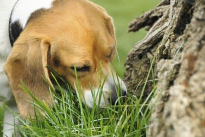 Pourquoi mon chien est-il coprophage ? 16 raisons qui l'expliquent
