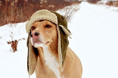 Savez vous comment protéger votre chien contre le froid, la neige et la glace ?