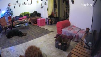 J'ai testé la caméra Furbo avec mon chien ! Retour d'expérience.