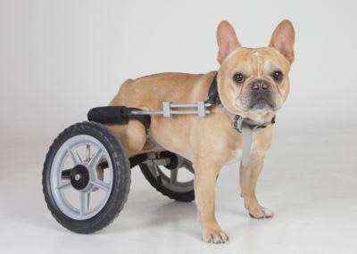 Il y a de fortes chances que votre chien se blesse au moins une ou deux fois dans sa vie, voire même plus souvent si vous avez un bulldozer ! Les accidents arrivent; faites de votre mieux pour vous y préparer.