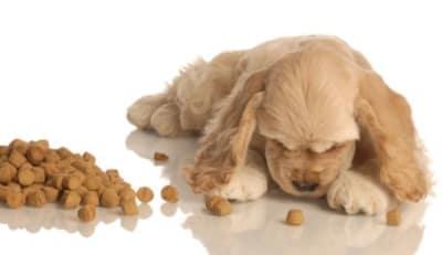 Tous les propriétaires de chiens veulent le meilleur pour leur poilu et cela concerne bien sûr la nourriture donnée. Nous lisons toujours soigneusement les étiquettes de croquettes ou boites que nous donnons à manger à nos animaux. Mais nous pouvons être trompés par les fabricants https://www.rd.com/advice/pets/ways-dog-food-labels-lie/. E, clair, il ne faut pas croire tout ce qu'on peut lire sur les boites d'aliments !