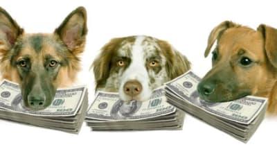 Vous voulez un chien ? Savez-vous ce qu'il va vous coûter ?
