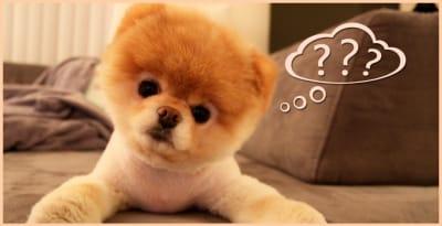 Nous tous, proprietaires de chiens même avertis, nous avons quelques questions auxqulles nous n'avons jamais vraiment cherché de réponses. Et bien, voilà qui, enfin, sera fait..Mais peut-être il y en  a-t-il d'autres ?