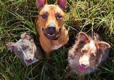 6 erreurs que nous faisons tous avec nos chiens et qui mettent leur santé en danger !
