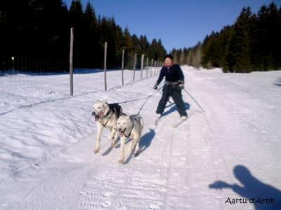 Pour les fans de froid et de sport, voici une activité idéale à pratiquer avec votre compagnon, qui va adorer, calme et zenitude assurés: il s'agit du skijoring ou Ski joëring.