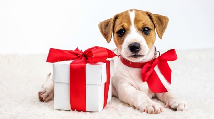 Quels cadeaux de Noel offrir à votre chien ?