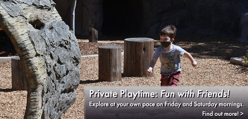 Private Playtime: fun with friends