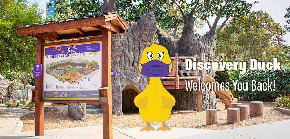 Discovery Duck Welcomes You Back