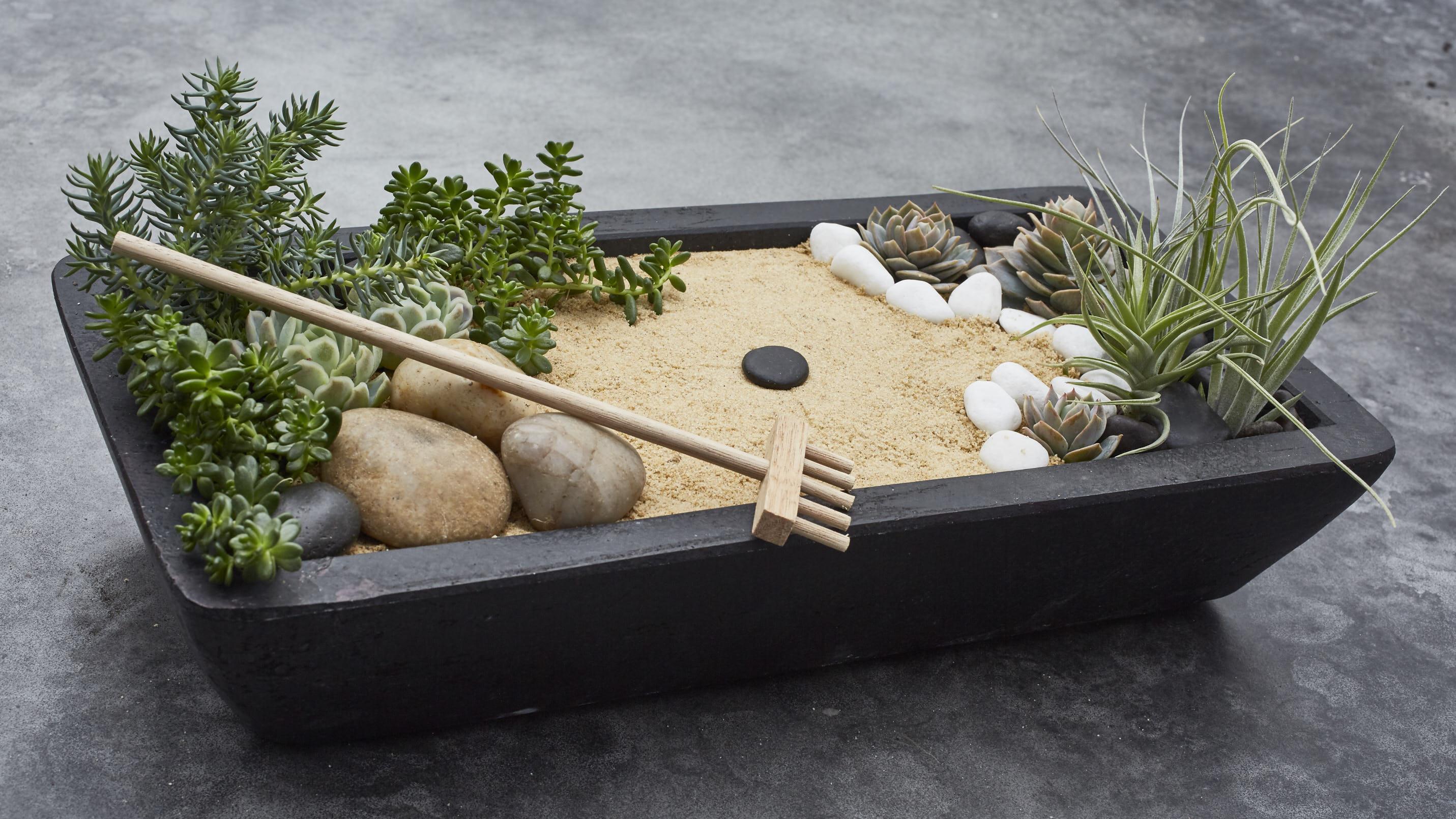 miniature zen garden with plants
