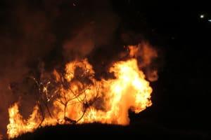 Der Regenwald in Süd- und Mittelamerika brennt erneut.