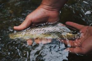 Ein Fischer hält einen Fisch in der Hand