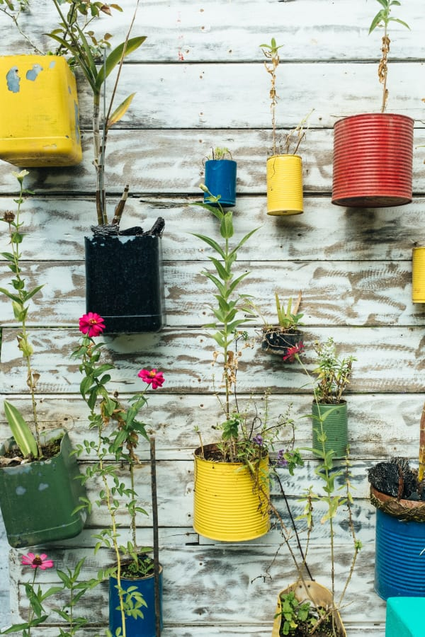 Plastic containers that have been converted into pots for plants, hang on the wall