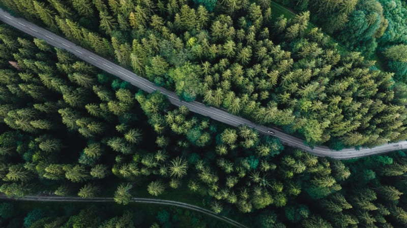 Looking down onto a forest