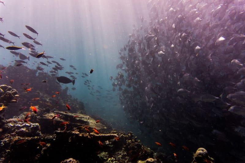Das Bild zeigt das Leben unter Wasser, welches wir kaum kennen.