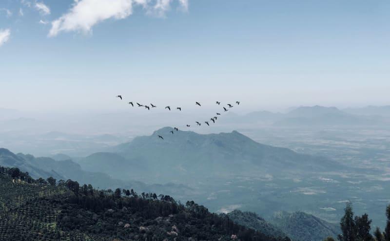 Die Zugvögel auf Reise