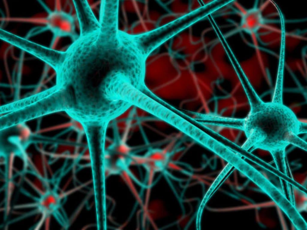 single neuron image