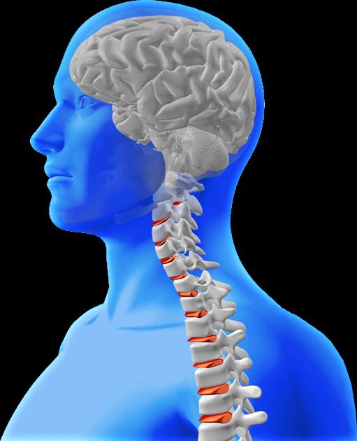 brain-spine-3d1