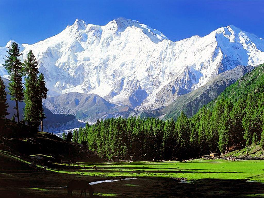 Summit-Rakaposhi-With-Chkar-Tour-Guide