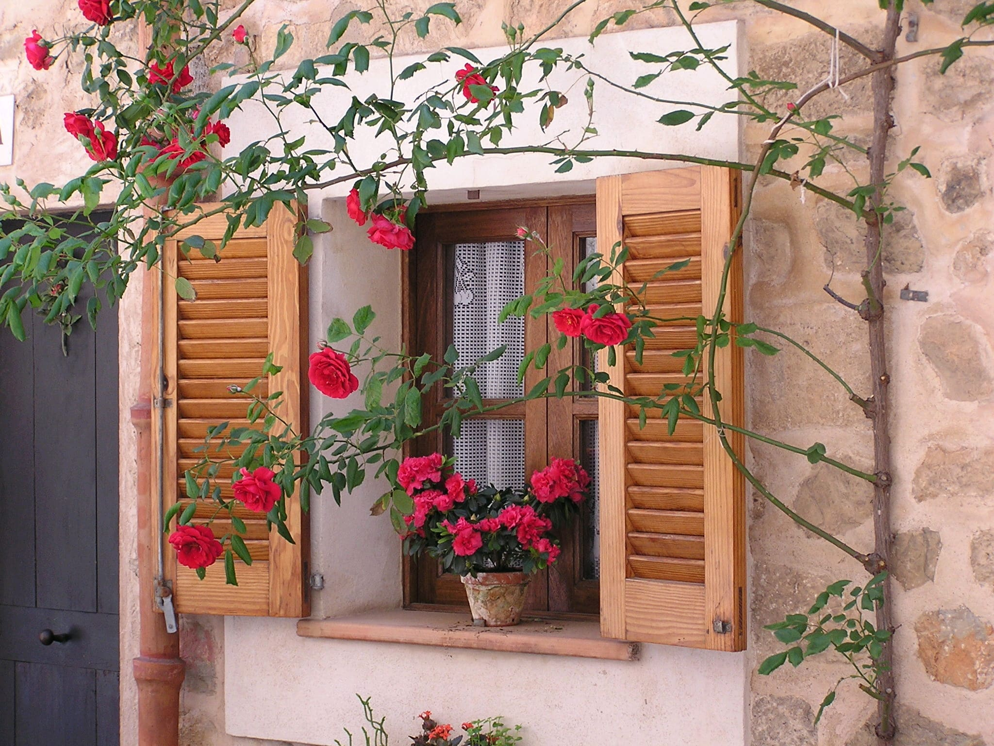 Holzfenster mit Blumentopf