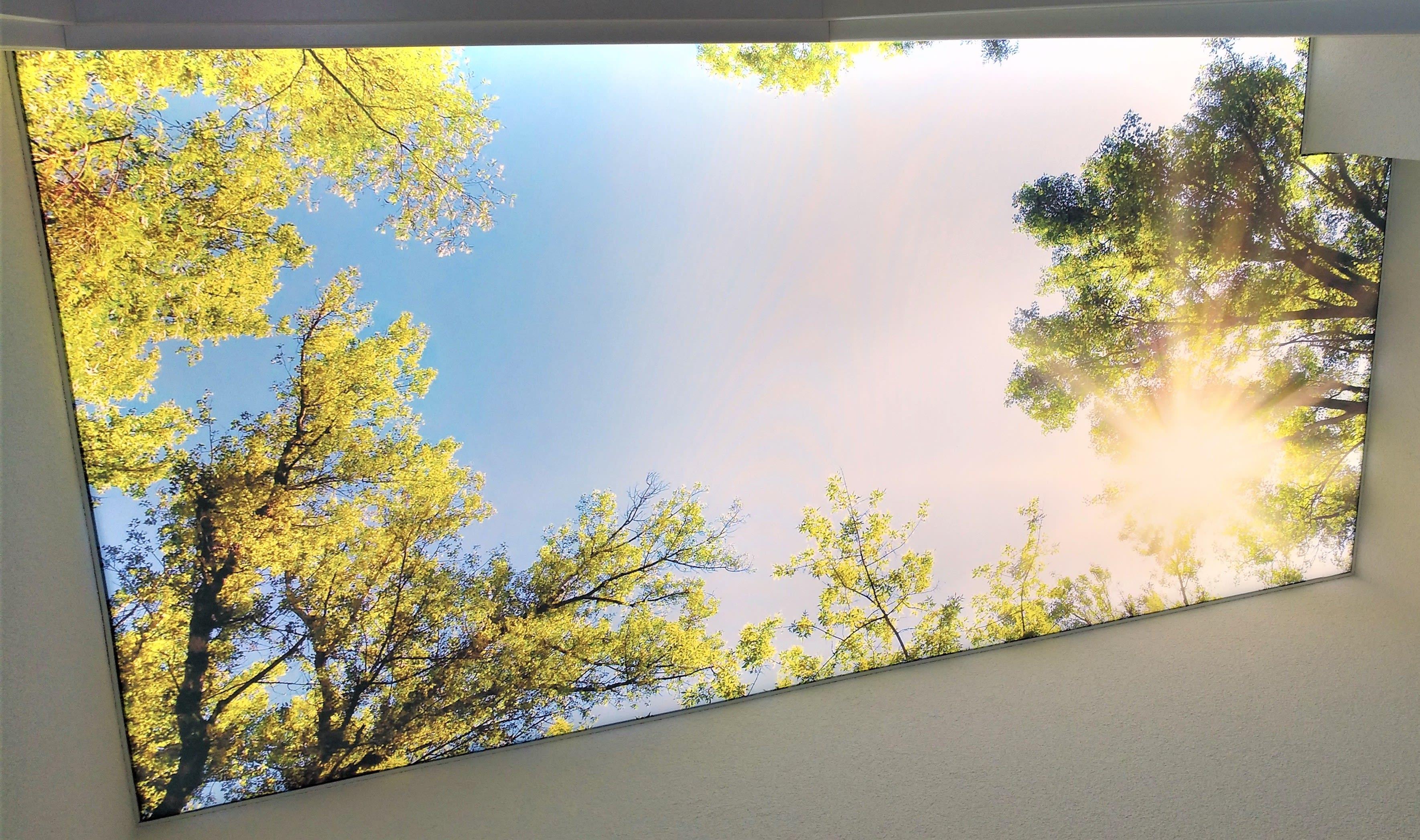 Motivdecke mit Wald und Himmel als Druck