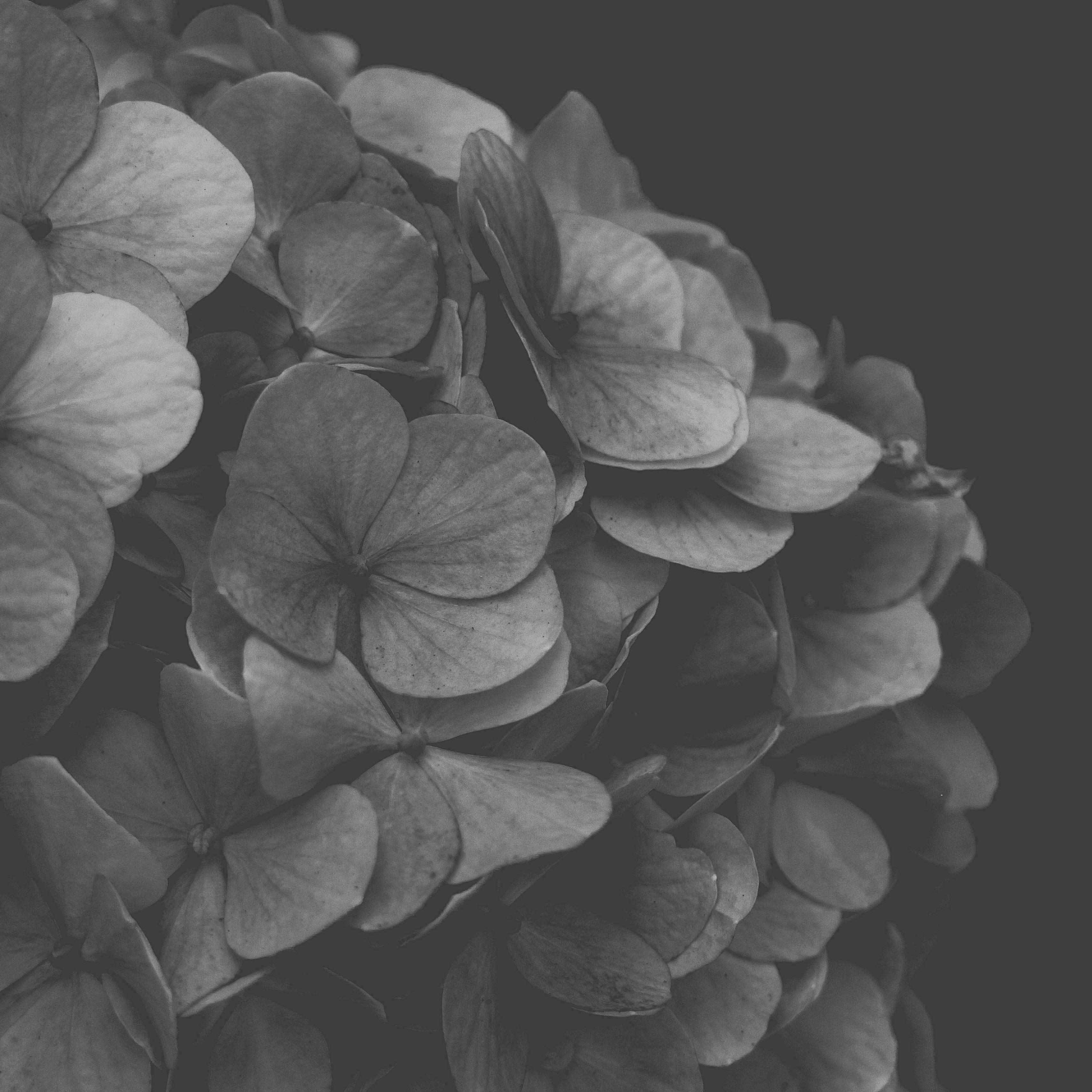 Blumen schwarz-weiß