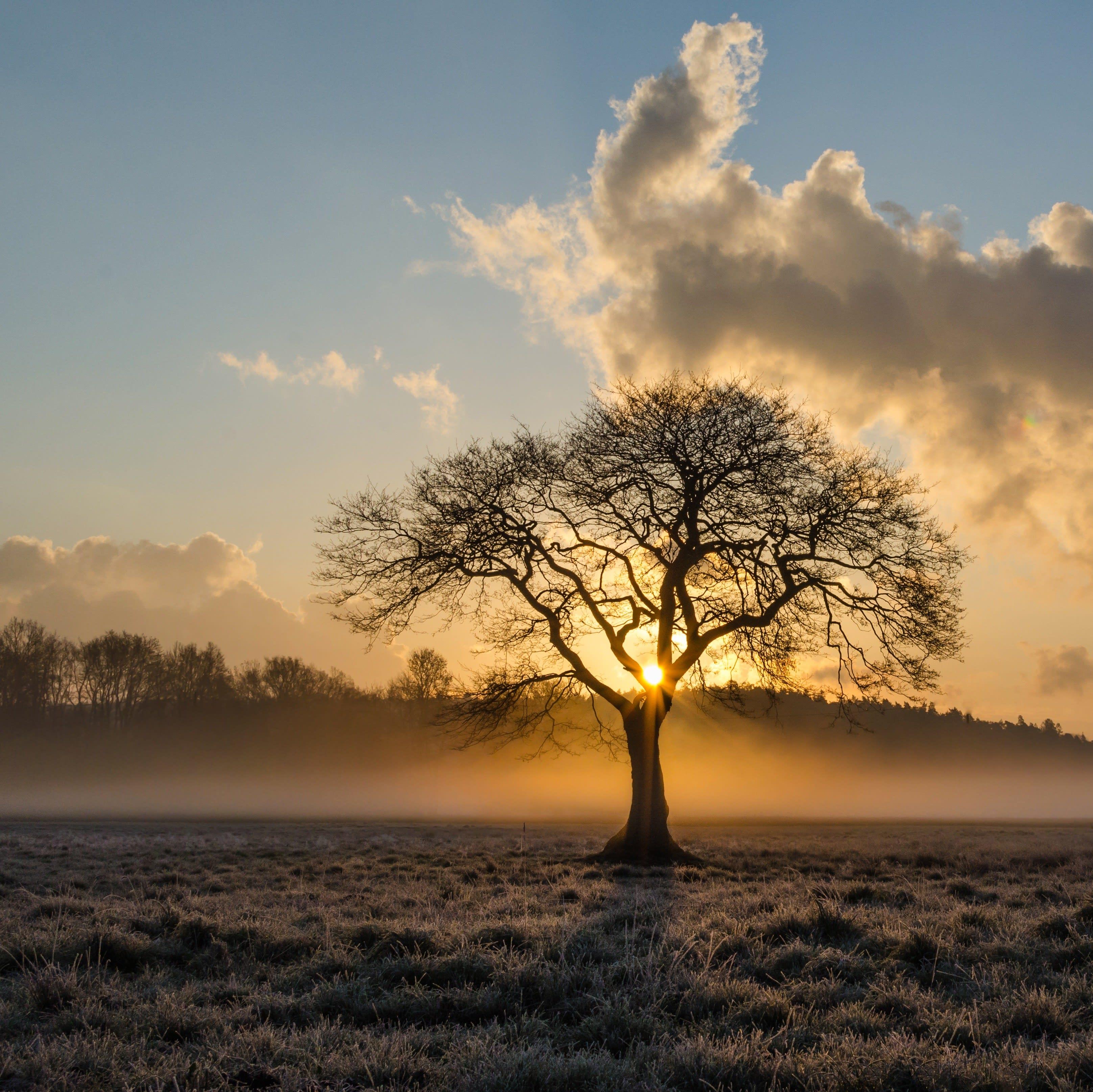 Baum inmitten eines Feldes
