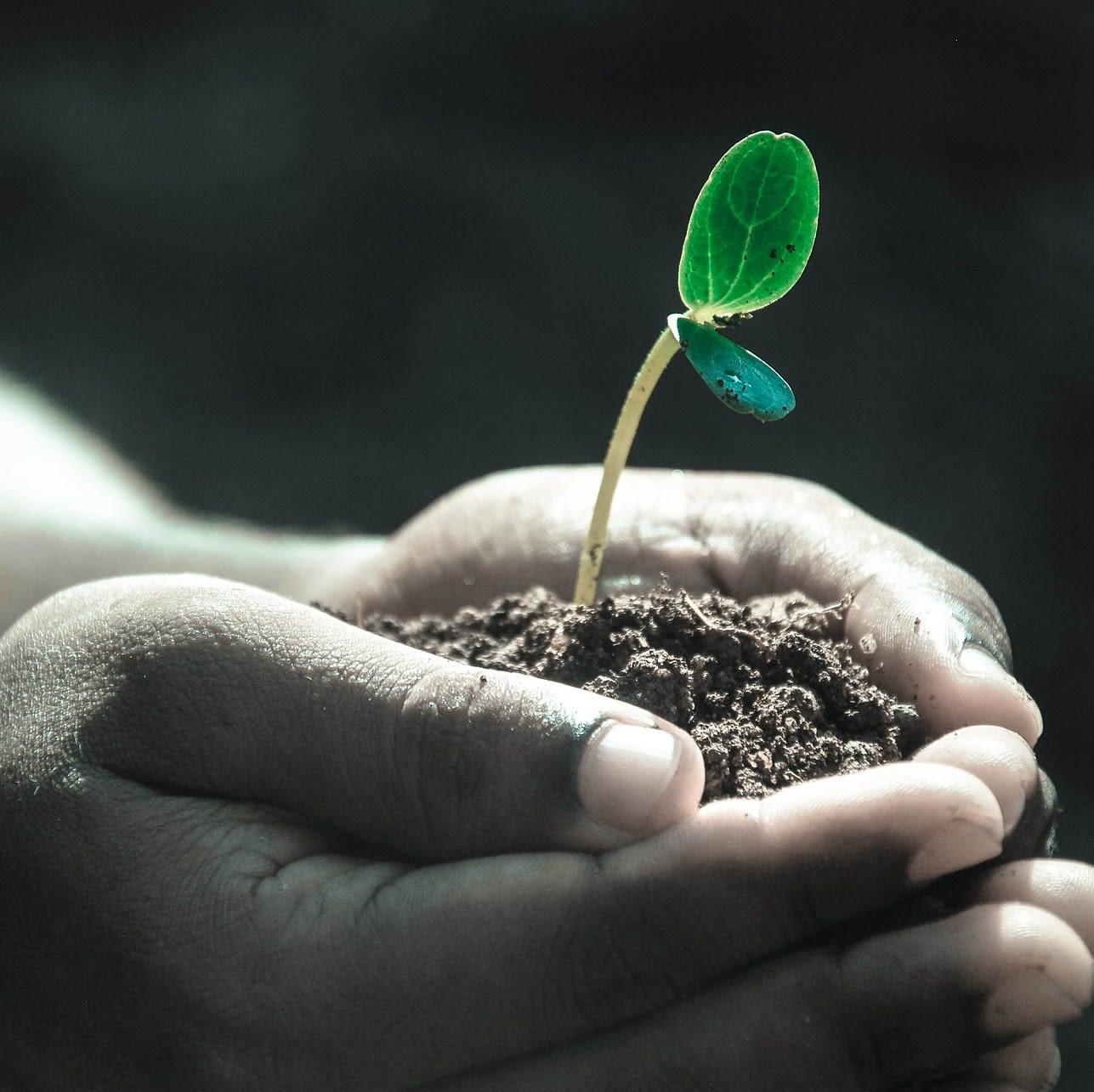 Pflanze in Händen