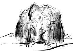 Weidenrinde Zeichnung