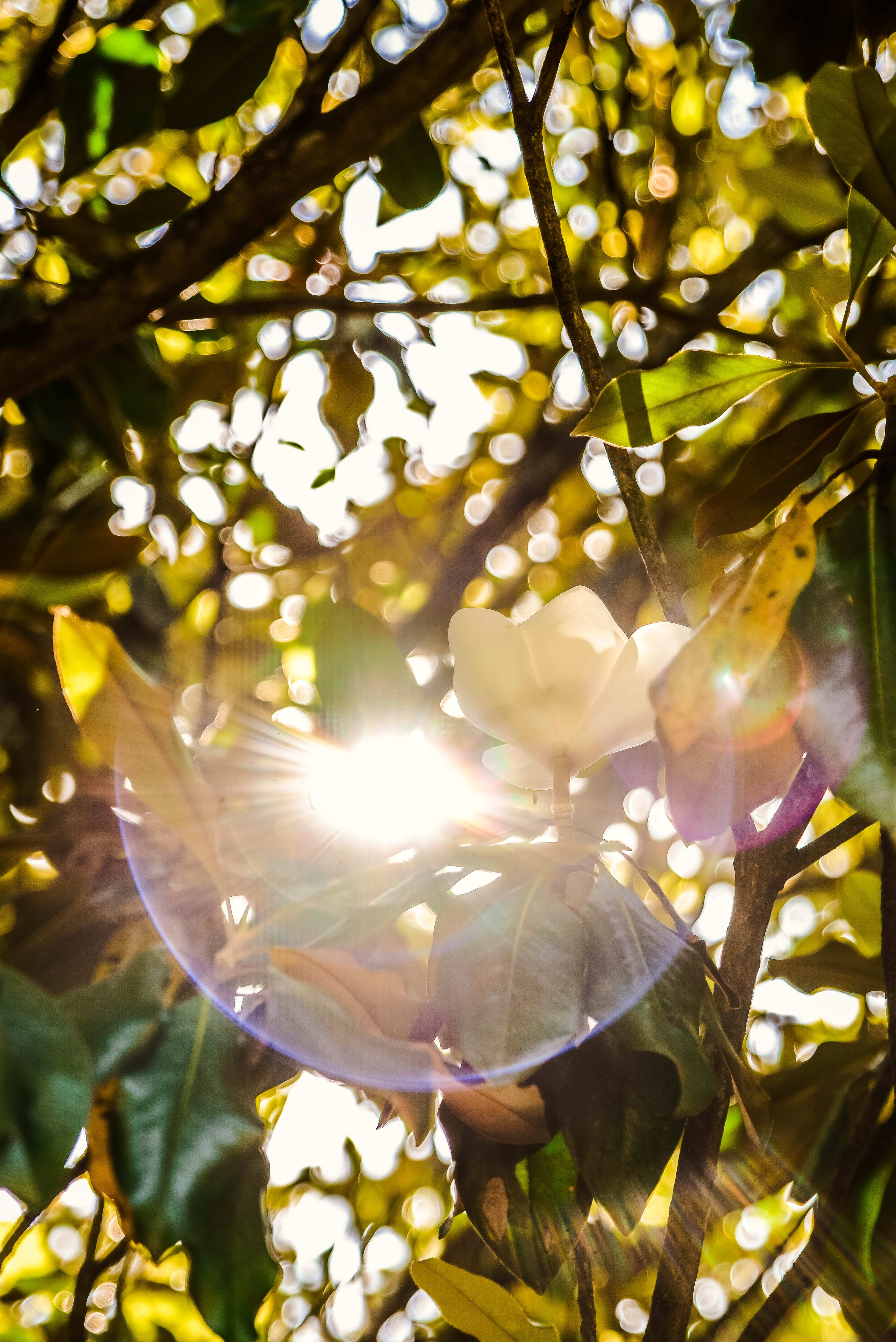 LoslassCoaching Licht