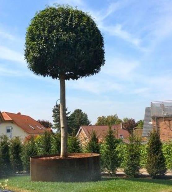 Corstenstahl Topf für Baum