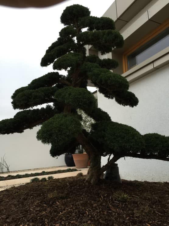 Bepflanzung dunkler Baum